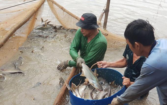 Nông dân tặng ao cá cho gian hàng 0 đồng 6